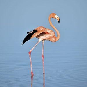 bird-wing-beak-stork-flamingo-vertebrate-water-bird-ciconiiformes-1407547